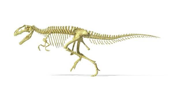 Cretaceous Wall Art - Photograph - Giganotosaurus Dinosaur Skeleton by Leonello Calvetti/science Photo Library