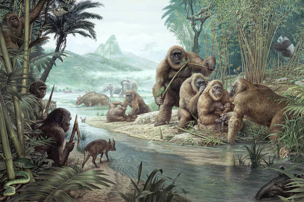 Raising Wall Art - Photograph - Gigantopithecus With Homo Erectus by John Sibbick / Science Photo Library