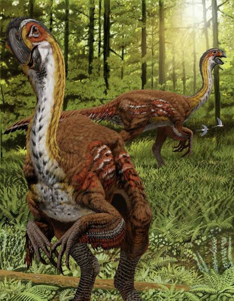 Wall Art - Photograph - Gigantoraptor by Jaime Chirinos/science Photo Library