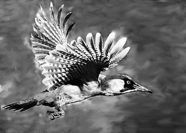 Photograph - Gila Woodpecker Sedona Arizona by Bob and Nadine Johnston