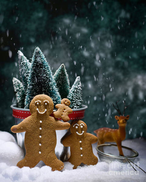 Tree Face Photograph - Gingerbread Family In Snow by Amanda Elwell