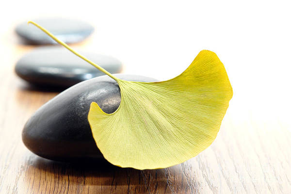 Photograph - Ginkgo Leaf  by Olivier Le Queinec
