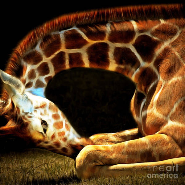 Photograph - Giraffe 20150211brun Square by Wingsdomain Art and Photography