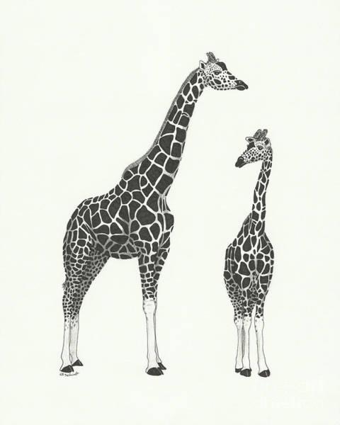 Drawing - Giraffe And Calf by E B Schmidt