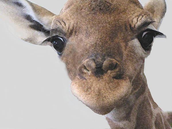 Photograph - Giraffe Baby by Diane Alexander