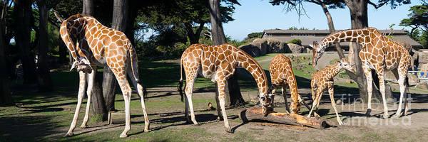 Colorful Giraffe Photograph - Giraffe Dsc2872 Long by Wingsdomain Art and Photography