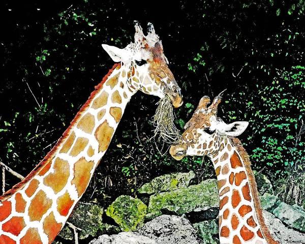 Digital Art - Giraffe Fine Dining by Lizi Beard-Ward