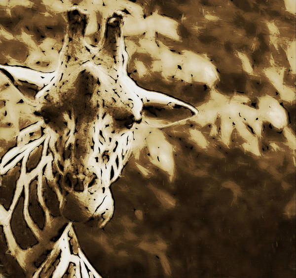 Photograph - Giraffe In Brown by Alice Gipson