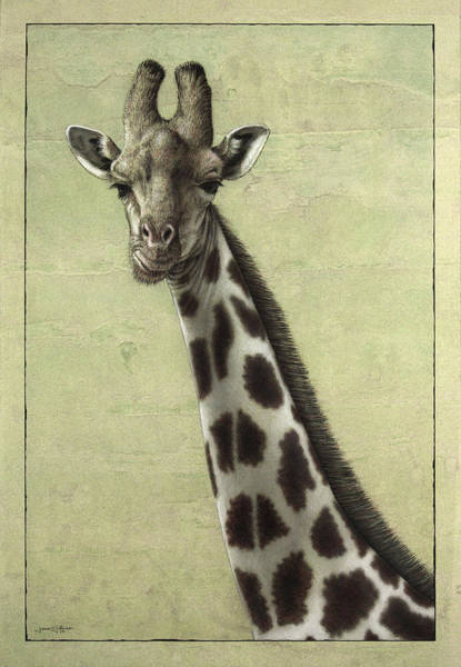 James Wall Art - Painting - Giraffe by James W Johnson