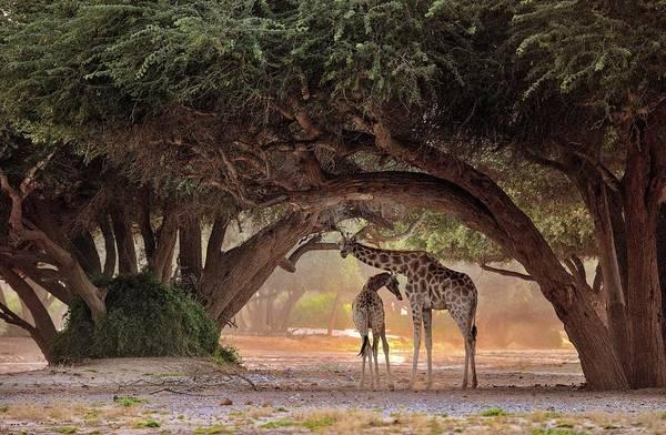 Dot Wall Art - Photograph - Giraffe - Namibia by Giuseppe D\\\'amico