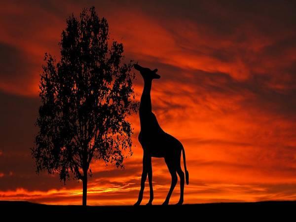 Photograph - Giraffe Sunset Silhouette Series by David Dehner