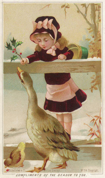 Goose Drawing - Girl And Goose          Date Circa 1890 by Mary Evans Picture Library