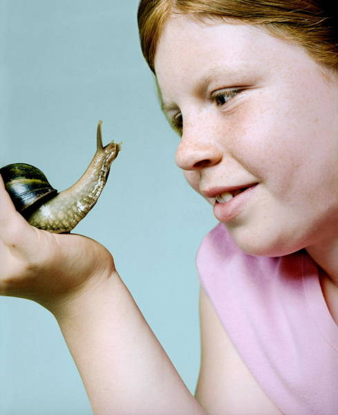 Gastropod Wall Art - Photograph - Girl Holding A Giant Snail by Richard Bailey/science Photo Library