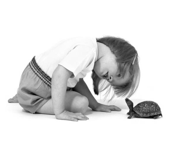 Photograph - Girl Looking At Box Turtle, C.1960s by L Fritz and ClassicStock