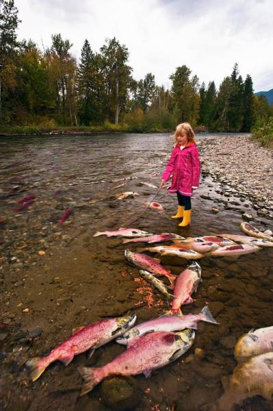 Wall Art - Photograph - Girl Watching Salmon Spawn by David Nunuk/science Photo Library