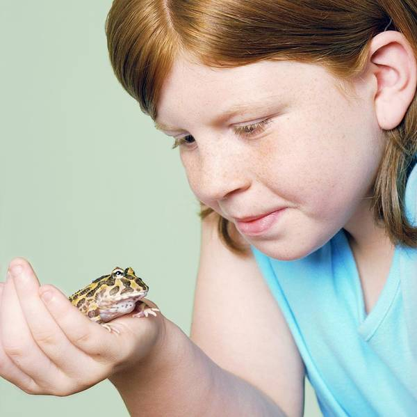 Pet Care Photograph - Girl With Her Pet Toad by Richard Bailey/science Photo Library
