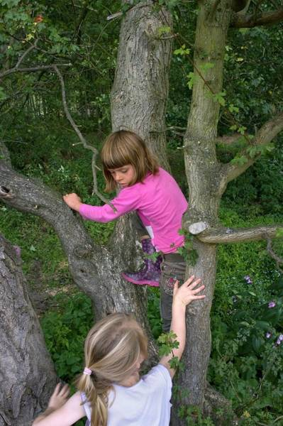 Wall Art - Photograph - Girls Playing In A Tree by David Woodfall Images/science Photo Library