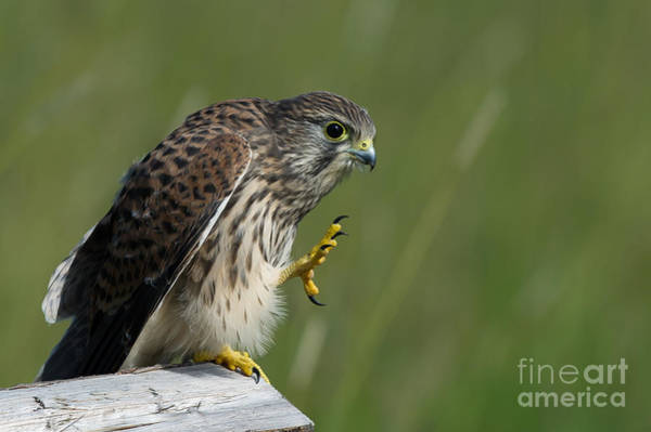 Photograph - Give Me Five by Torbjorn Swenelius