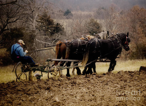 Plow Horses Photograph - Give Thanks For The Beauty Of The Earth by Leslie Heemsbergen