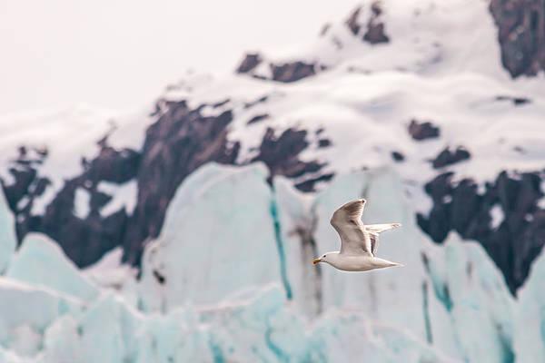 Photograph - Glacial Bird by Melinda Ledsome