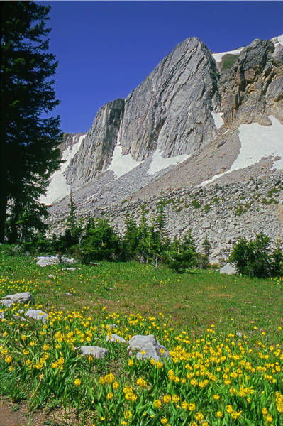 Photograph - M-09701-glacier Lillies, Wy  by Ed  Cooper Photography