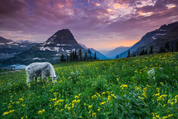 Montana Wall Art - Photograph - Glacier National Park 4 by Larry Marshall
