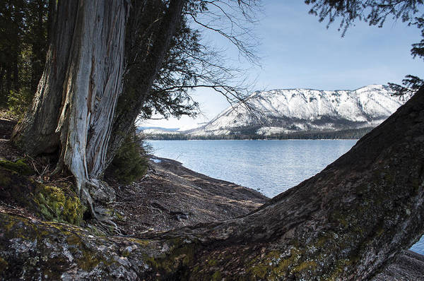 Photograph - Glacier Park View by Fran Riley