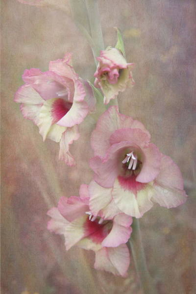 Vogel Photograph - Gladiola by Angie Vogel