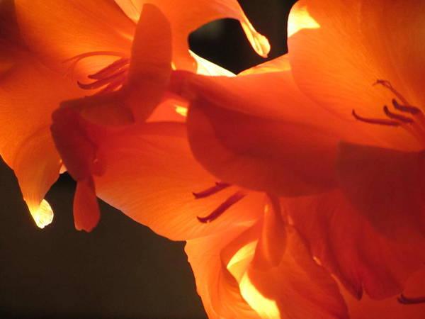 Photograph - Gladiola Close Up 3 by Anita Burgermeister
