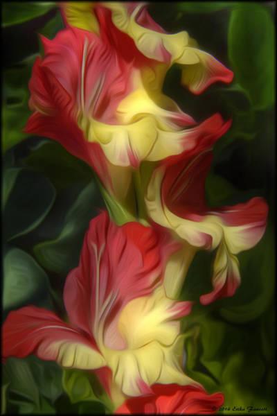Photograph - Gladiolus by Erika Fawcett