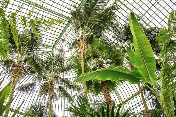 Wall Art - Photograph - Glass House With Palms by Reporters/science Photo Library