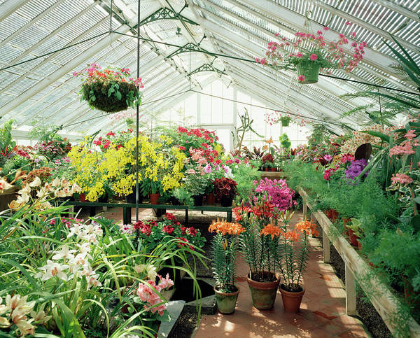 Glasshouse Photograph - Glasshouse by Andy Williams/science Photo Library