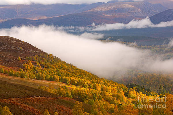 Wall Art - Photograph - Glenmore Forest And The Cairngorms by Louise Heusinkveld