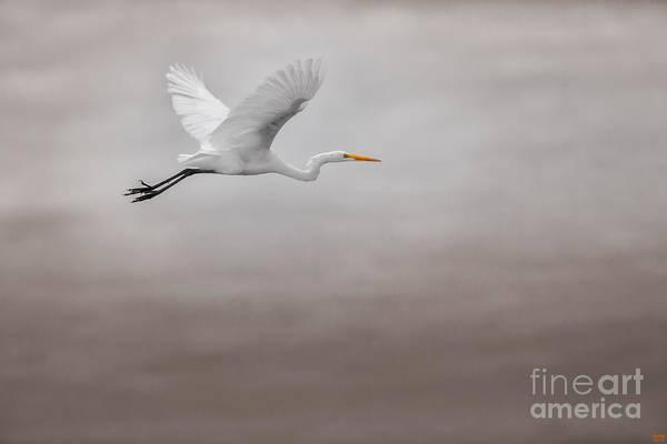 Photograph - Gliding Egert by David Millenheft