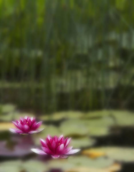 Pink Lily Photograph - Gliding by Rebecca Cozart