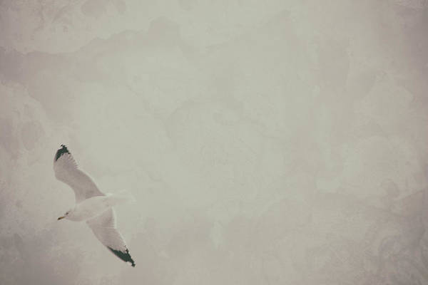 Thru Photograph - Gliding Thru Life by Karol Livote