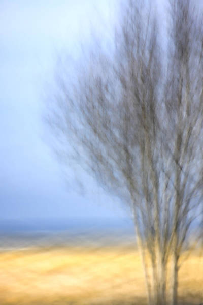 Wall Art - Photograph - Glimpse Of Trees Sand And Beach by Carol Leigh