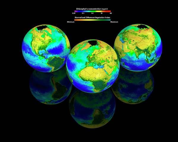 Index Photograph - Global Chlorophyll Distribution by Carlos Clarivan