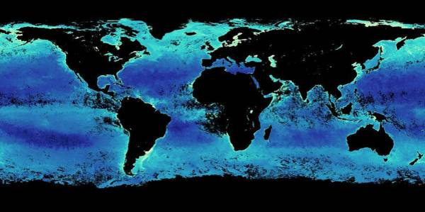 Earth Observation Wall Art - Photograph - Global Chlorophyll Levels by Nasa Earth Observations