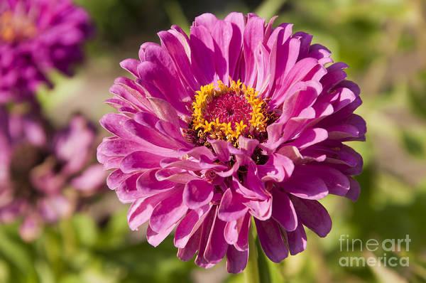 Photograph - Glorious Flower by Brenda Kean