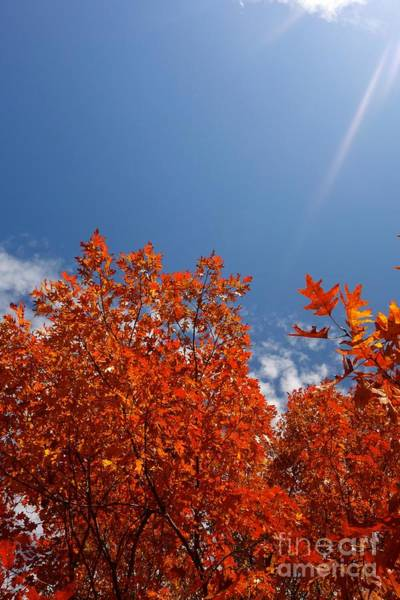 Photograph - Glorious Orange by Jacqueline Athmann