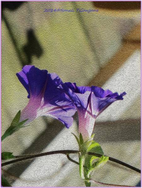 Greetingcards Photograph - Glorious Two by Sonali Gangane