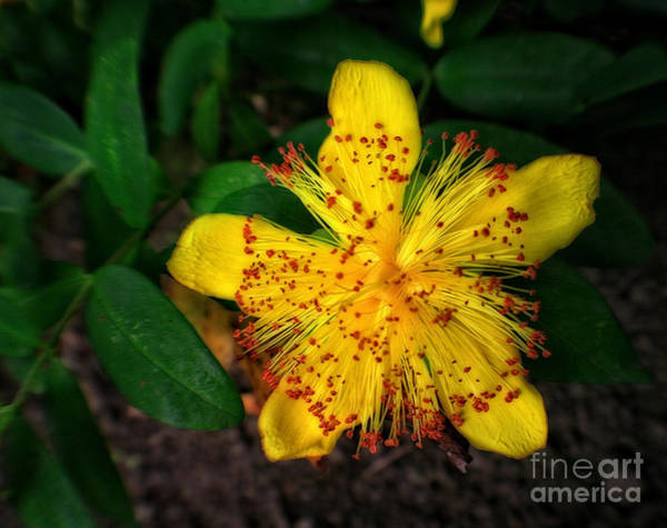 Photograph - Yellow And Red Flower by Doc Braham