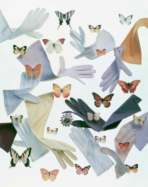 Wildlife Photograph - Gloves And Butterflies by Ernst Beadle