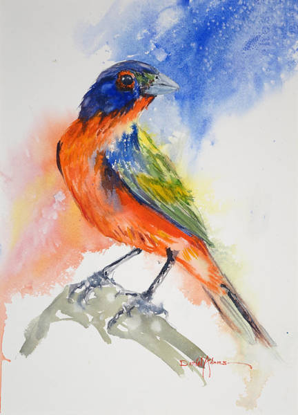 Painting -  Da188 Glow Of The Painted Bunting Daniel Adams by Daniel Adams