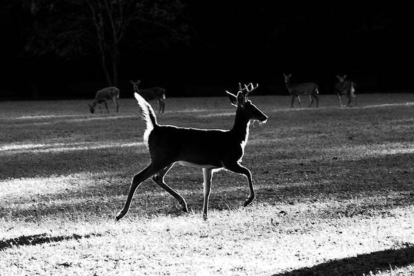 Photograph - Glowing Buck by Lorna R Mills DBA  Lorna Rogers Photography