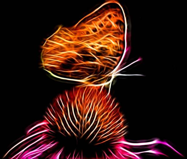 Photograph - Glowing Butterfly by Kathy McCabe