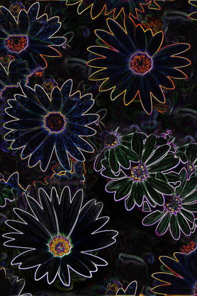 Photograph - Glowing Daisies by Jim Baker