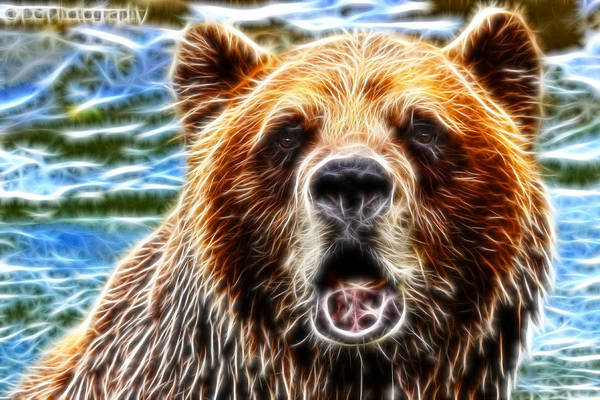 Grizzlies Mixed Media - Glowing Grizzly by Davandra Cribbie