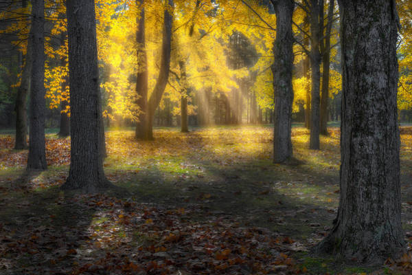 Photograph - Glowing Maples by Bill Wakeley